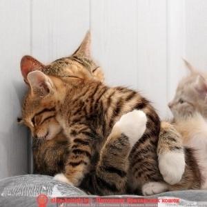 ищу кота для британской кошки случка британцев случка британской кошки кот британец для случки как случать британских кошек случка британских котов как скрещивать британских кошек вязка британских котов в минске вязка британских кошек вязка британских кошек в гомеле вязка британский кот вязка котов британцев в минске вязка британских кошек в витебске первая вязка британской кошки вязка британцев с шотландцами вязка шотландских кошек с британскими британские коты вязка объявления вязка британцев в минске вязка вислоухих британцев бесплатная вязка британцев вязка британского кота с кошкой британская вислоухая кошка вязка вязка кошек британской породы связка британских котов британские котята вязка вязка кошек британцев вязка британских кошек в гомеле ищу кота британца для вязки кот для вязки британец скрещивание британских кошек ищу британского кота для вязки спаривание британских котов спаривание британской кошки спаривание британцев британцы вязка с кем вязать британскую кошку сколько стоит вязка британских кошек вязка шотландских кошек с британскими британскую кошку повязать нужен британский кот для вязки британские коты вязка объявления вязка британцев в минске вязка вислоухих британцев найти кота для вязки британец бесплатная вязка британцев котик для вязки британец нужен кот для вязки британец вязка британского кота с кошкой британская вислоухая кошка вязка ищем кошку британскую для вязки когда можно вязать британскую кошку вязка кошек британской породы британский вислоухий кот вязка кот для вязки британская шиншилла найти британского кота для вязки связка британских котов британские котята вязка вязка кошек британцев найти британца для вязки как вязать британцев кот для вязки британец бесплатно британец для вязки бесплатно нужен британец для вязки