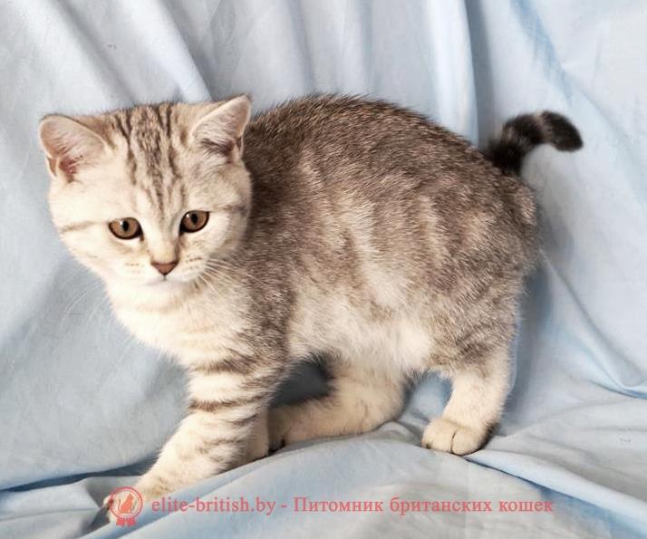 британский кот мраморный, мраморный британец, мраморный окрас британских котят, серебристый мраморный британец, мраморный британец фото, британские котята мраморного окраса фото, британский кот мраморного окраса, британец голубой мрамор, британские котята фото мраморные, мраморная британская кошка фото, британец черный мрамор на серебре, британская мраморная кошка характер, красный мраморный британец, британские кошки мраморного окраса фото, британские коты мраморные фото, британцы мрамор на серебре фото, британский мраморный котенок, британская мраморная кошка, британец мрамор, британец мраморного окраса, британские котята мрамор, британец мрамор на серебре, британец мраморный кот, британец мраморного окраса, британский кот черный мрамор, британские котята мрамор на серебре, британский кот мрамор на серебре, мраморный окрас британской кошки, мраморный окрас британской кошки, британские кошки черный мрамор, черный мраморный британец, черный мрамор британцы, котята британцы мраморный окрас, мраморная британская короткошерстная кошка, британские кошки мрамор на серебре, британский котенок черный мрамор, котята британцы мраморный окрас, мраморные британцы котята, кот британец фото мраморный, британцы мраморный окрас фото, рыжий британский кот, рыжий британец фото, рыжие британские котята фото, британский кот рыжий фото, ыжий британец, британские рыжие котята, рыжий британец кот, британская кошка рыжая, котята британцы рыжие фото, британцы рыжего окраса, котенок рыжий британец, британская короткошерстная кошка рыжая, ританский кот рыжего окраса, британские котята рыжего окраса, британцы красного окраса, красный британец, красные британцы, британская красная кошка, британский кот красный, красные британские коты, красный окрас британских кошек, британский кот красного окраса, красный британец фото, фото красных британцев, красный окрас британских кошек, британец красного окраса, британский кот красного окраса, британец рыжего окраса, британский кот рыжего окраса, британс