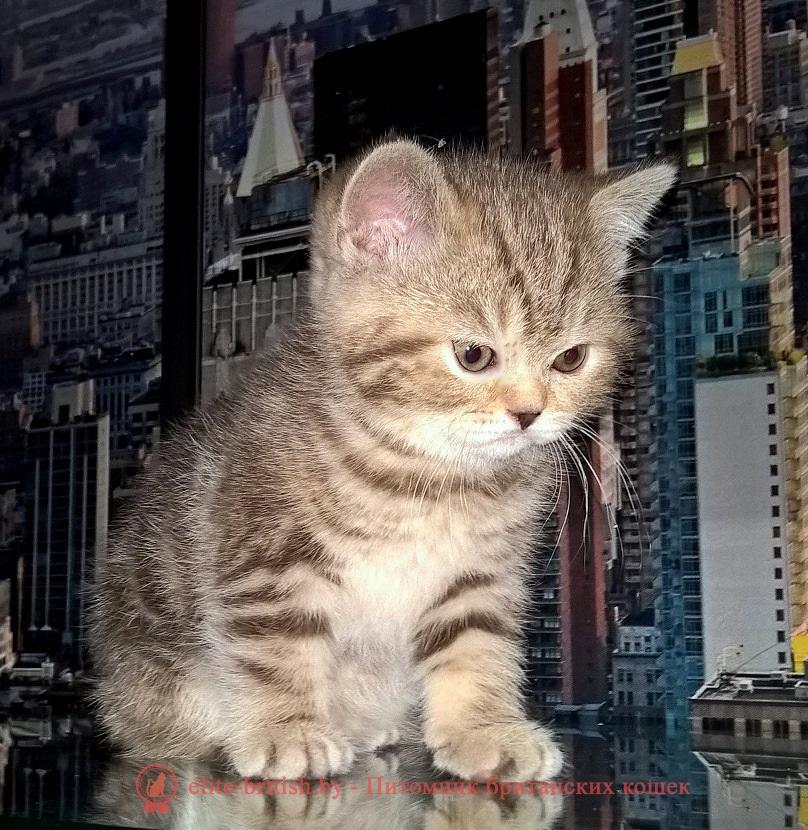 фото британских котят табби, британские котята табби, британские кошки табби, окрасы британских кошек табби, короткошерстная британская кошка серебристый табби, британские коты табби фото, британские котята окраса табби, табби британец, табби британец фото, британец окрас табби, британцы серебристый табби, британская короткошерстная кошка табби, британская кошка табби фото, британская кошка серебристый табби, британская кошка окрас табби фото, британские коты табби, британские котята браун табби, британские котята табби купить, британец табби тигровый, британец черный фото, черные британцы фото, черная британская кошка, черная британская кошка фото, черный британский кот фото, черные британские коты фото, черный британский кот, черные британские коты, британский черный котенок, черные британские котята, кот британец черный фото, черные коты британцы фото, британские котята черного окраса, черный британец, британцы черные, фото черного британского котенка, черные британские котята фото, черный британец котенок, котята британцы черные, черные вислоухие британцы фото, черный вислоухий британец фото, черный дым британская кошка фото, британский кот черный дым, британские коты черного окраса фото, британские котята черный дым, британцы коты черные, черный бри�