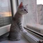 Москитная сетка для кошек Pet Screen - АНТИКОШКА