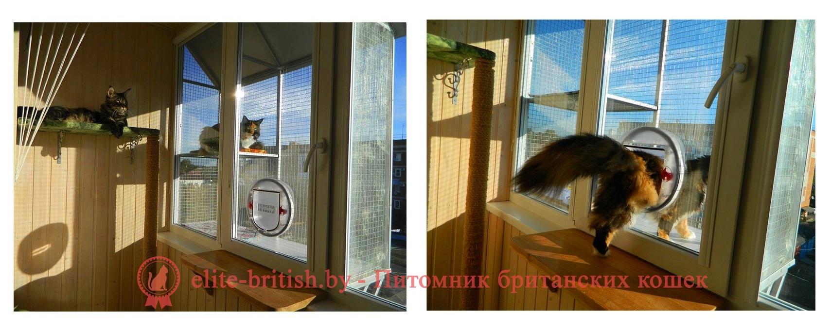 Сетка на окно для кошек своими руками 61