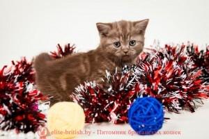 шоколадные британцы фото, британские кошки шоколадного окраса фото, британские шоколадные котята фото, британские кошки шоколадный окрас, шоколадный британец, британская шоколадная кошка фото, британский шоколадный кот фото, купить британского котенка шоколадного окраса,котенок британец шоколадный, шоколадные британцы котята фото, шоколадная британская кошка, шоколадный британский кот, британские коты шоколадного окраса, британские коты шоколадного окраса фото, британские котята шоколадного окраса фото, британец кот шоколадный, шоколадный британский котенок, британский котенок шоколадного окраса, шоколадные британские котята купить, британский вислоухий шоколадный котенок, купить шоколадного котенка британца, кошки британцы шоколадные, шоколадные британцы купить, британцы окрас шоколадный, британец шоколадного цвета, кошки британские коричневые, британские коричневые котята фото, британцы коричневого цвета, британские кошки коричневого окраса, британский кот коричневый, коричневые британские котята, коричневый британец, кот британец коричневый, британские котята, британский кот, британская кошка, британец кот, британцы, котята британцы, британец порода кошки, коты породы британец, кошки британской породы, коты британской породы, британцы кошки, котенок британской породы, котики британцы, котята от британской кошки, котенки британцы, кошечки британцы, котята британского кота, британская кошка и кот, кошки котята британцы, британцы коты и кошки, британский породистый кот, британские котята фото, британская кошка фото, британский кот фото, британец кот фото, британцы котята фото, британцы фото, британская короткошерстная кошка фото, британский короткошерстный кот фото, кошки британцы фото, котята британские короткошерстные фото, фото котов британской породы, фото кошек порода британская, коты породы британец фото, коты британцы фото цены, котик британец фото, британец короткошерстный фото, котята британской породы фото, британские коты фотографии, фото британских кошек