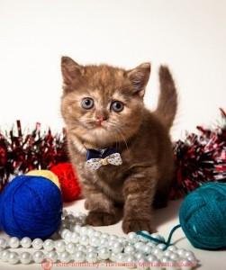 фото британских котят табби, британские котята табби, британские кошки табби, окрасы британских кошек табби, короткошерстная британская кошка серебристый табби, британские коты табби фото, британские котята окраса табби, табби британец, табби британец фото, британец окрас табби, британцы серебристый табби, британская короткошерстная кошка табби, британская кошка табби фото, британская кошка серебристый табби, британская кошка окрас табби фото, британские коты табби, британские котята браун табби, британские котята табби купить, британец табби тигровый, британец черный фото, черные британцы фото, черная британская кошка, черная британская кошка фото, черный британский кот фото, черные британские коты фото, черный британский кот, черные британские коты, британский черный котенок, черные британские котята, кот британец черный фото, черные коты британцы фото, британские котята черного окраса, черный британец, британцы черные, фото черного британского котенка, черные британские котята фото, черный британец котенок, котята британцы черные, черные вислоухие британцы фото, черный вислоухий британец фото, черный дым британская кошка фото, британский кот черный дым, британские коты черного окраса фото, британские котята черный дым, британцы коты черные, черный британец кот, черно белые британцы, черно белый британец, британец черный мрамор на серебре, британцы черный дым фото, британец черный цена, британские кошки окрас черный, британские кошки черный мрамор, британские кошки черного окраса фото, британская вислоухая кошка фото черная, кошки британские вислоухие черные, питомник черных британских кошек, британский кот черный мрамор, британский черный вислоухий кот фото, черно белый британский кот, черный британский вислоухий кот, фото британских котят черного окраса, британский котенок черный мрамор, британский вислоухий черный котенок, черные британцы вислоухие, черный вислоухий британец, британец черного цвета, черный мраморный британец, британцы черный окрас, черный мрамо