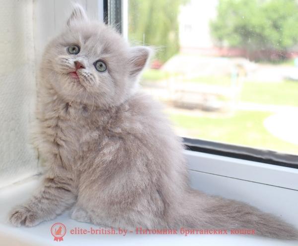 Прививки кошкам и котятам