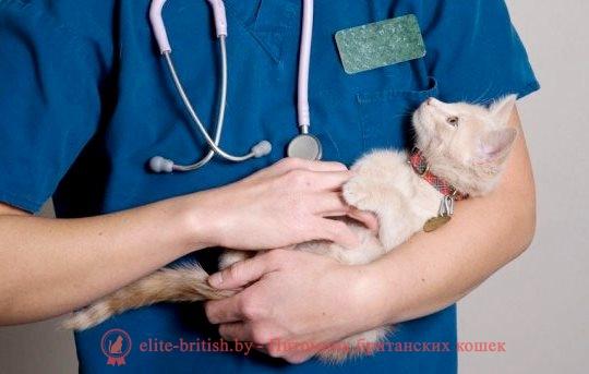 Прививки кошкам и котятам. Какие и когда делать. Вакцинация кошек.