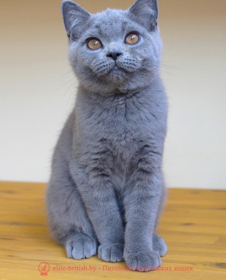 Породы кошек с фотографиями Фото всех пород кошек и котов
