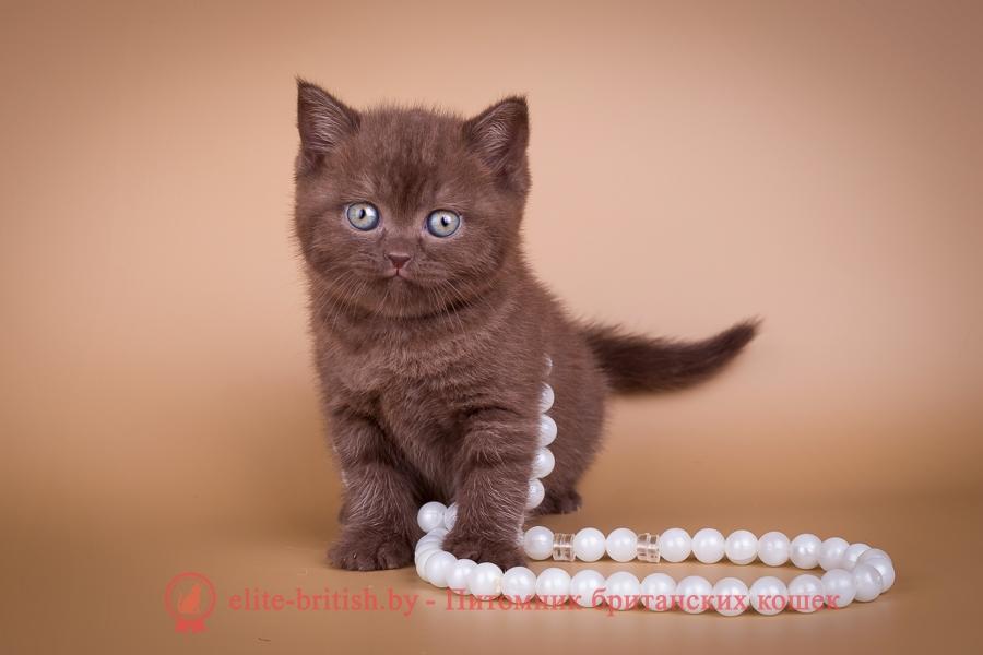 британские котята стоимость британец кот стоимость британец стоимость британская кошка фото стоимость стоимость британских кошек котята британцы стоимость стоимость британских котов сколько стоит котенок британец британский кот сколько стоит сколько стоит британец сколько стоит британская кошка сколько стоит британский котенок цена сколько стоит кот британец сколько стоит голубой британец сколько стоит котенок британский короткошерстный британский кот цена британская кошка цена в беларуси британские котята цена в минске британская голубая кошка фото цена британский короткошерстный кот цена голубой британец цена голубые британцы цена британец цена британская кошка фото цена британские голубые котята цена кот британец голубой цена купить британца котенка цена британец шиншилла фото цена котята британцы фото и цена британец фото цена британские коты фото цена цена британцев котят британский голубой кот цена голубые британские коты цена кот британской породы цена короткошерстный британец цена британская короткошерстная кошка фото цена британские котята цена питомник котята британской породы фото цена кошки британцы цена британец белый цена британские кошки окрасы цена британские кошки цена москва золотые британские котята цена кот британская шиншилла цена котята британской шиншиллы цена кошки британской породы фото цены порода котов британец цена порода кошек британец фото цена британские золотые шиншиллы котята цена британские лиловые котята цена золотой британец цена кот британская шиншилла цена котята британской шиншиллы цена шоколадный британский котенок британский котенок шоколадного окраса шоколадные британские котята купить британский вислоухий шоколадный котенок купить шоколадного котенка британца кошки британцы шоколадные шоколадные британцы купить британцы окрас шоколадный британец шоколадного цвета