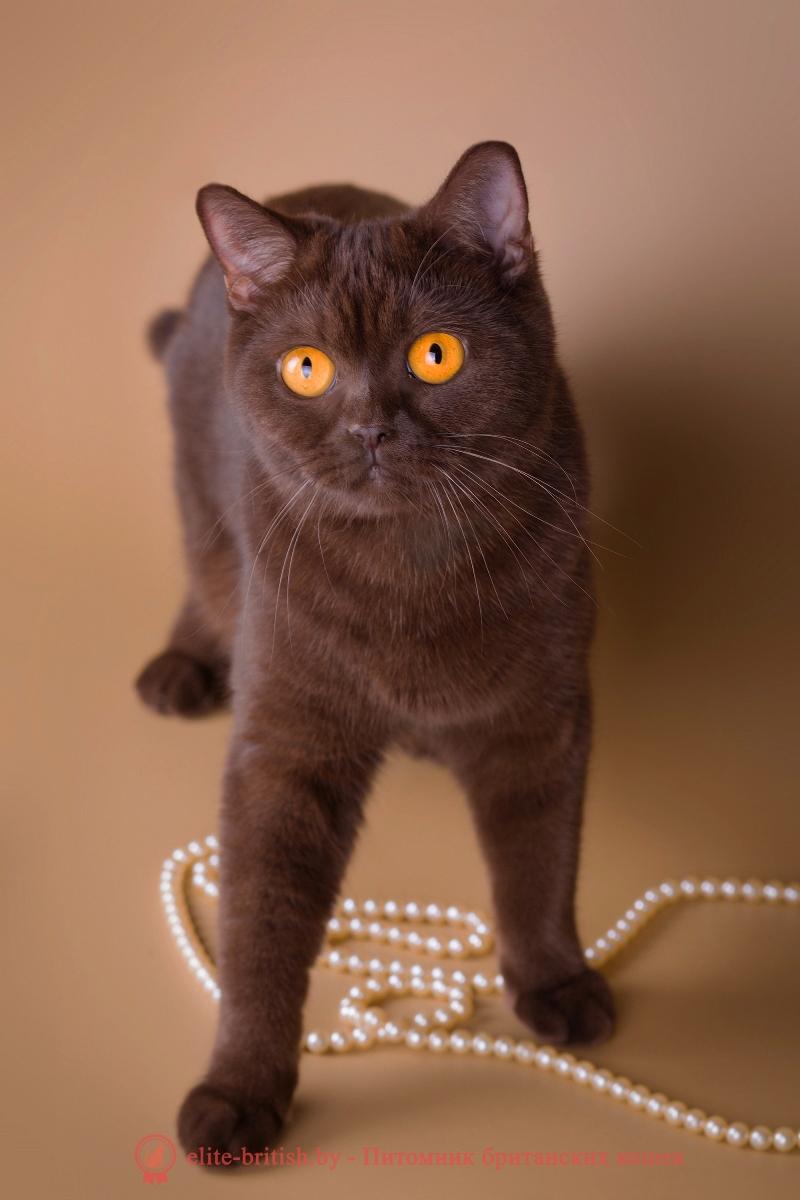 Элементарные правила генетики окрасов кошек  Питомник