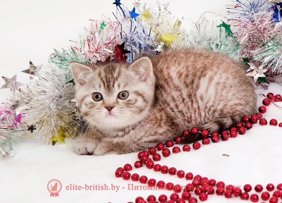 ТОП-10 пород кошек с окрасом табби (17 фото)