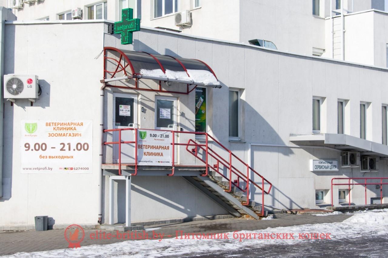 Зубная поликлиника киров карла либкнехта регистратура