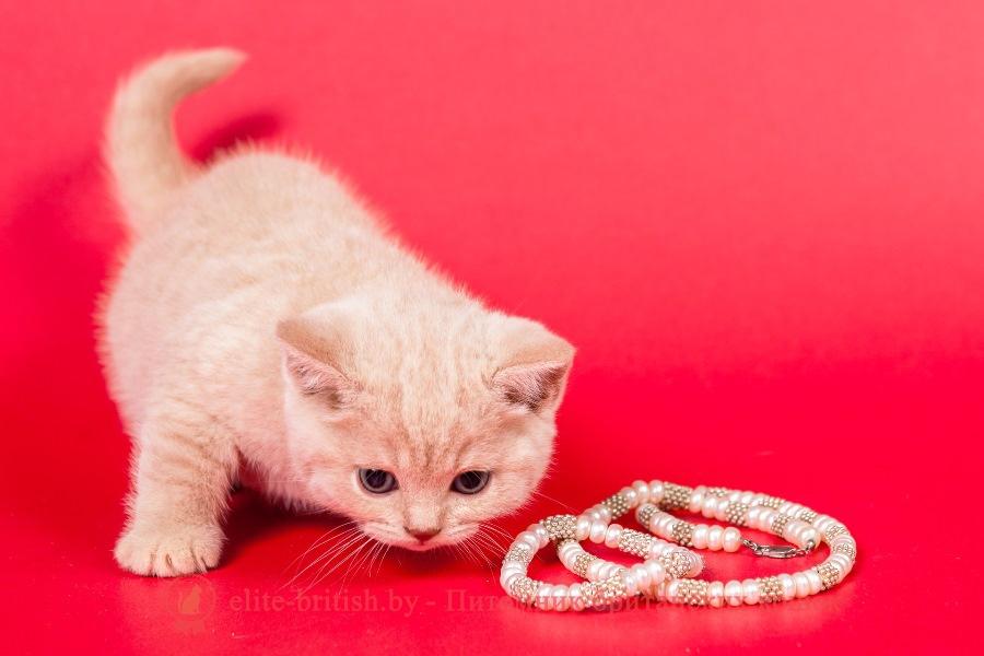 Видео домик для котенка 81