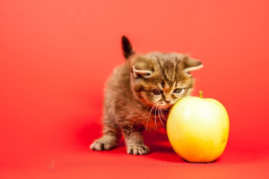 Видео домик для котенка 39