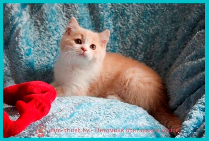 биколор британская кошка, кот британский биколор, британский котенок биколор, голубой биколор британец, биколор британец, британские котята биколор фото, британцы биколор фото, лиловый британец,  британец лиловый фото, фото лиловых британцев, британский лиловый котенок,  британские коты лилового окраса фото, фото лиловых британских котят,  британские котята фото лиловые, британская кошка фото лиловая, фото лиловой британской кошки, британские котята лилового окраса фото, лиловая британская кошка, британский лиловый кот фото, британские котята лилового окраса, лиловый окрас британских кошек фото, лиловый британский кот, кот британец лиловый фото, лиловый окрас британских кошек, британцы лилового окраса, британец лилового цвета, британец лилового окраса фото, лиловые британцы вислоухие фото, британская короткошерстная кошка лиловая, лиловый цвет британских кошек, британская лиловая кошка характер, британские котята лилового цвета, британские вислоухие котята фото лиловые, котята британцы лиловые фото, британский кот лилового окраса, британский вислоухий кот лиловый, британские котята лиловые купить, британские лиловые котята цена, купить лилового британца, лиловые британцы котята, британцы коты лиловые, британцы лилак поинт, британцы вислоухие лиловые, бежевые британцы, бежевый британец фото, кошки британские бежевые, бежевые британские коты, британские котята кремовые фото, британские кремовые коты фото, кремовый британец фото, британские котята кремового окраса фото, британец персикового цвета фото, британские котята персиковые фото, британские персиковые котята, британец персиковый, британец персиковый фото, британцы персикового окраса, британские котята кремового окраса, кремовый окрас британских кошек, британцы кремового окраса, британский кот кремового окраса, британская кошка кремовый окрас фото, британские котята кремового окраса фото