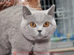 Татьяна Филлипович_голубая кошка_