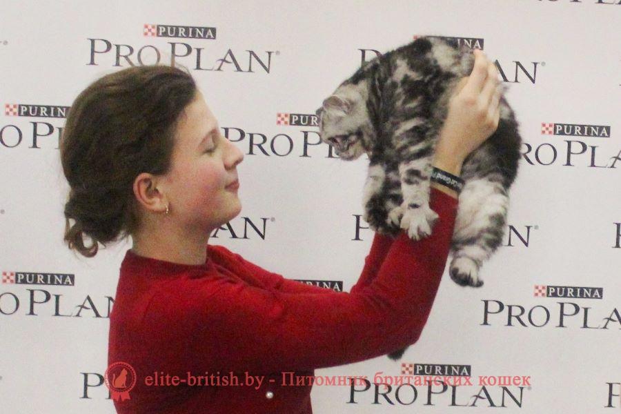 Британский котенок серебристого мраморного окраса Babette Irabell*BY