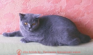 Adeline (BRI a)