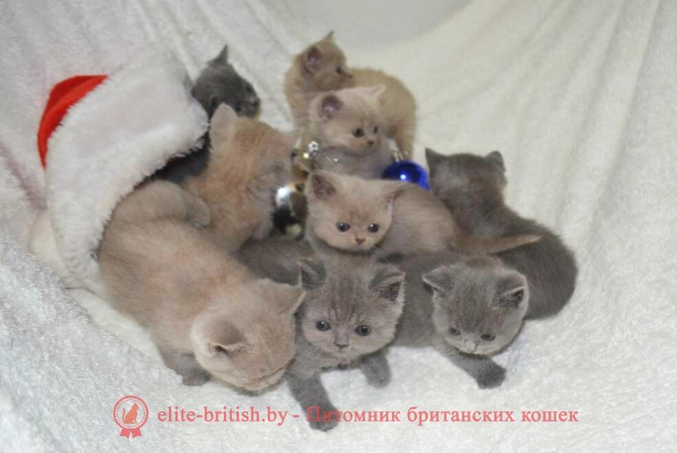 голубые и лиловые котята-4