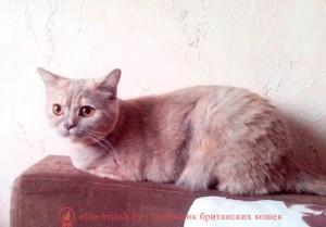 кошка Виктори