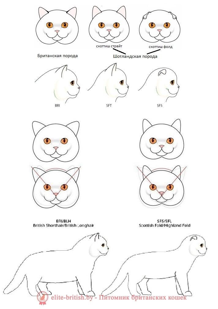 британская вислоухая кошка описание породы характер, порода кошек британская вислоухая, порода кошек британская вислоухая фото, порода кошек вислоухие британцы, британская вислоухая кошка описание породы, кошки породы британец вислоухий фото, британский вислоухий кот описание породы, порода котов британец вислоухий, кот британской породы вислоухие, порода британская вислоухая, порода вислоухий британец, британские вислоухие коты характеристика породы, котята британской породы фото вислоухие, имена для кошек девочек британской породы вислоухие, коты британской породы фото вислоухие, кошки британской породы фото вислоухие цена, порода кошек британцы вислоухие описание породы, кошки британцы вислоухие описание породы фото