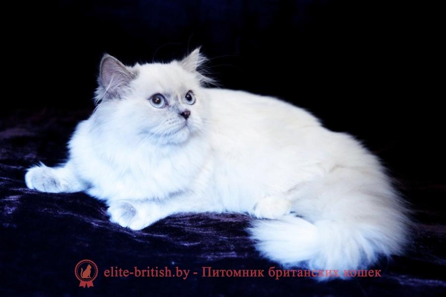 Черепаховая дымная британская кошка, котята, британские котята черепахового окраса фото, черепаховый окрас британской кошки фото, черепаховый британец, британская черепаховая кошка фото, британцы черепахового окраса фото, кошки британские черепахового окраса, черепаховый британский кот, британские коты черепахового окраса, британская черепаховая кошка, британские черепаховые котята, британские котята черепахового окраса, британцы черепаховый окрас, черепаховые британцы фото, британские кошки черепахового окраса, британцы черепахового окраса, британская кошка черепаховый окрас фото, котята британские черепаховый окрас, британец черепахового окраса фото, британские котята черепахового окраса фото, британская кошка черепаший окрас, британский кот черепахового окраса