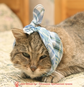 Что делать если у кота сломался клык