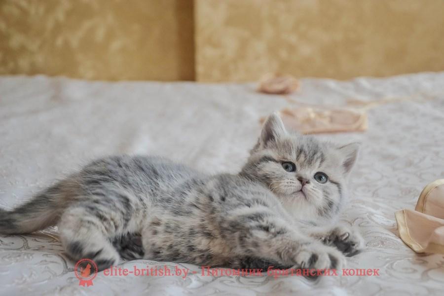 купить британского котенка, купить британца, британец голубой фото, голубые британцы фото, британский кошки голубой, британская голубая кошка, британская голубая кошка фото, британской голубой кошки фото, кот британский голубой, коты британские голубые, голубые британские котята фото, британский голубой котенок фото, британский голубой кот фото, фото британского голубого кота, окрас британских котят голубой фото, британские котята голубого окраса фото, британцы коты фото голубые, кот голубой британец фото, британский голубой котенок, британские голубые котята, британская вислоухая кошка фото голубая, британская голубая кошка фото цена, голубые британцы, голубой британец, британские котята табби, британские кошки табби, короткошерстная британская кошка серебристый табби, табби британец, британцы серебристый табби, британские коты табби, британские котята браун табби, британец табби тигровый, британская короткошерстная кошка табби, британская кошка серебристый табби, окрасы британских кошек табби, британские котята окраса табби, британец окрас табби, фото британских котят табби, британские коты табби фото, табби британец фото, британская кошка табби фото, британская кошка окрас табби фото, британцы окраса вискас, британцы вискас фото, котенок британец вискас, британец вискасного окраса, британская кошка вискас, окрас вискас британских кошек, британская кошка фото вискас, британская кошка окрас вискас фото, британские котята вискас купить, британские котята цвета вискас, вислоухий британец вискас, британец окрас вискас фото, британский кот вискас, британский котенок вискас, британские котята окрас вискас купить, британец вискас купить, британец кот вискас, вискасный британец, коты британцы вискас фото, британцы цвета вискас, британский кот серебристый, серебристый британец фото, серебристые британцы, британские серебристые котята, британская полосатая короткошерстная кошка, британский котенок полосатый, полосатые британцы, британские полосатые кошки, полосатые британск