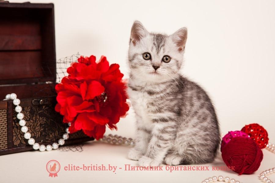 британцы окраса вискас, британцы вискас фото, котенок британец вискас, британец вискасного окраса, британская кошка вискас, окрас вискас британских кошек, британская кошка фото вискас, британская кошка окрас вискас фото, британские котята вискас купить, британские котята цвета вискас, вислоухий британец вискас, британец окрас вискас фото, британский кот вискас, британский котенок вискас, британские котята окрас вискас купить, британец вискас купить, британец кот вискас, вискасный британец, коты британцы вискас фото, британцы цвета вискас,британская пятнистая кошка, кот британский пятнистый, британская полосатая короткошерстная кошка, британский котенок полосатый, полосатые британцы, британские полосатые кошки, полосатые британские коты, полосатые британцы котята, британец кот полосатый, кошки британцы полосатые, британский полосатый кот фото, британские полосатые котята фото, котята британцы фото полосатые, полосатые британцы фото, фото британцев котов полосатых, тигровая британская кошка, британец тигровый, британец табби тигровый, тигровый британский котенок, британский котенок тигрового окраса, британская тигровая кошка фото, тигровые британские котята фото,