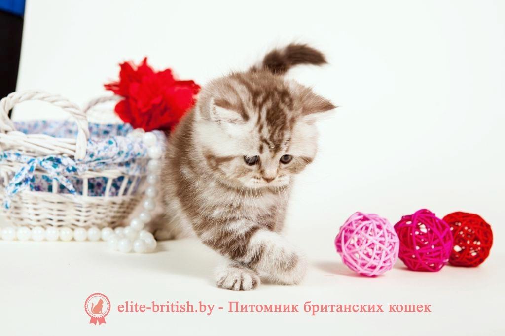 британский кот серебристый, серебристый британец фото, серебристые британцы, британские серебристые котята, тикированный британец, серебристый тикированный британец, кошки британские серебристые, британская короткошерстная окраса серебро, британские котята табби, британские кошки табби, короткошерстная британская кошка серебристый табби, табби британец, британцы серебристый табби, британские коты табби, британские котята браун табби, британец табби тигровый, британская короткошерстная кошка табби, британская кошка серебристый табби, окрасы британских кошек табби, британские котята окраса табби, британец окрас табби, фото британских котят табби, британские коты табби фото, табби британец фото, британская кошка табби фото, британская кошка окрас табби фото, британцы окраса вискас, британцы вискас фото, котенок британец вискас, британец вискасного окраса, британская кошка вискас, окрас вискас британских кошек, британская кошка фото вискас, британская кошка окрас вискас фото, британские котята вискас купить, британские котята цвета вискас, вислоухий британец вискас, британец окрас вискас фото, британский кот вискас, британский котенок вискас, британские котята окрас вискас купить, британец вискас купить, британец кот вискас, вискасный британец, коты британцы вискас фото, британцы цвета вискас, британский кот серебристый, серебристый британец фото, серебристые британцы, британские серебристые котята, британская полосатая короткошерстная кошка, британский котенок полосатый, полосатые британцы, британские полосатые кошки, полосатые британские коты, полосатые британцы котята, британец кот полосатый, кошки британцы полосатые, британский полосатый кот фото, британские полосатые котята фото, котята британцы фото полосатые, полосатые британцы фото, фото британцев котов полосатых, британцы окраса вискас, британцы вискас фото, котенок британец вискас, британец вискасного окраса, британская кошка вискас, окрас вискас британских кошек, британская кошка фото вискас, британская кошка