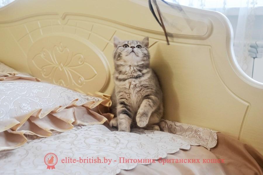 британцы окраса вискас, британцы вискас фото, котенок британец вискас, британец вискасного окраса, британская кошка вискас, окрас вискас британских кошек, британская кошка фото вискас, британская кошка окрас вискас фото, британские котята вискас купить, британские котята цвета вискас, вислоухий британец вискас, британец окрас вискас фото, британский кот вискас, британский котенок вискас, британские котята окрас вискас купить, британец вискас купить, британец кот вискас, вискасный британец, коты британцы вискас фото, британцы цвета вискас