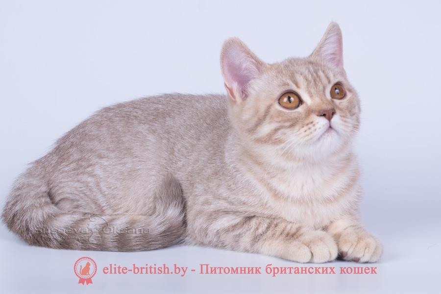 британцы окраса вискас, британцы вискас фото, котенок британец вискас, британец вискасного окраса, британская кошка вискас, окрас вискас британских кошек, британская кошка фото вискас, британская кошка окрас вискас фото, британские котята вискас купить, британские котята цвета вискас, вислоухий британец вискас, британец окрас вискас фото, британский кот вискас, британский котенок вискас, британские котята окрас вискас купить, британец вискас купить, британец кот вискас, вискасный британец, коты британцы вискас фото, британцы цвета вискасбританцы окраса вискас, британцы вискас фото, котенок британец вискас, британец вискасного окраса, британская кошка вискас, окрас вискас британских кошек, британская кошка фото вискас, британская кошка окрас вискас фото, британские котята вискас купить, британские котята цвета вискас, вислоухий британец вискас, британец окрас вискас фото, британский кот вискас, британский котенок вискас, британские котята окрас вискас купить, британец вискас купить, британец кот вискас, вискасный британец, коты британцы вискас фото, британцы цвета вискас