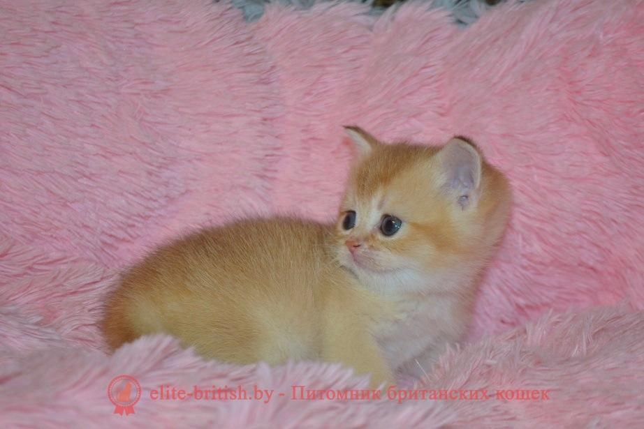 купить британского котенка, купить британца, купить британского котенка, купить британца, золотой британский кот, золотые британцы фото, золотой британец, британская кошка золотая шиншилла, британский кот шиншилла золотая, золотой тикированный британец, британец золотая шиншилла, британец золотистый, котята британские окрас золотая шиншилла, британская кошка золотая шиншилла фото, британец окрас золотая шиншилла фото, британский золотой котенок, британская золотая кошка, британские котята золотая шиншилла, британский золотистый кот, кот золотой британец, британцы окрас золотой, британцы окрас золотая шиншилла, котята британцы золотая шиншилла, золотистые британские котята, британские котята золотого окраса, британцы золотая шиншилла фото, золотой окрас британских кошек, британцы золотого окраса, британские котята золотого окраса, британец окрас золотая шиншилла, британские котята окраса золотая шиншилла, питомник британских кошек золотых окрасов, британец окрас золотая шиншилла фото, затушеванный британец, серебристый затушеванный британец, кошки британские серебристые, британская короткошерстная окраса серебро, золотой тикированный британец, британская кошка тикированная, тикированный британец