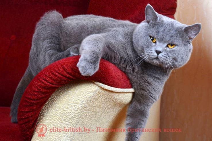 вязка британских кошек, кот для вязки британец, вязка британской кошки с британским котом, авито вязка британских кошек, авито кот для вязки британец, вязка британских кошек объявления, кот для вязки британец бесплатно, британский кот для вязки, ищем кота для вязки британца, найти кота для вязки британец, вязка британских кошек правила, ищу кота для вязки с британской кошкой, вязка британской кошки с шотландским вислоухим котом, вязка британских и шотландских кошек, авито британские коты для вязки, вязка британских котов в минске, кот для вязки британец бесплатно москва, вязка британской вислоухой кошки, балаково вязка британского кота, британские коты на вязку в питере, нужен кот для вязки британец, ищу британского кота для вязки, сколько стоит вязка британского кота, найти кота для вязки британец бесплатно, ищу кота британца для вязки бесплатно, вязка британский кот куфар, вязка британцев кошек, кот британская шиншилла вязка, вязка котов и кошек британцев