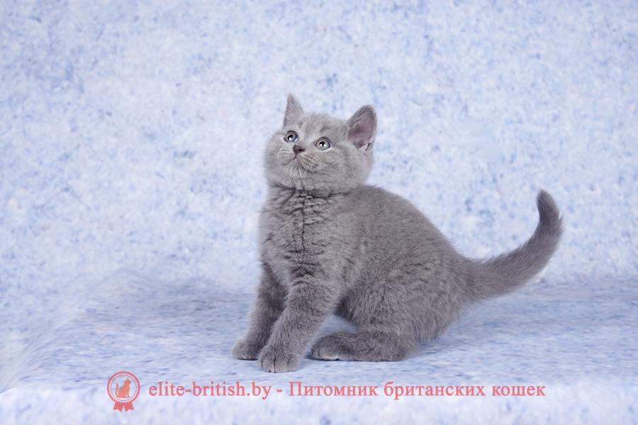 как отличить британского котенка от обычного как отличить британца от обычного котенка картезианская кошка и британская отличия как отличить британскую кошку как отличить британскую кошку от обычной отличительные черты британских кошек шатлансктнвислоухая и британская кошка отличия русская голубая кошка и британская отличия отличительные признаки британской породы кошек картезианская кошка отличие от британцев шартрез кошка отличие от британцев как отличить британца от обычного кота британская кошка отличия отличия британских котят британские коты как отличить как отличить кошку от кота британцы чем отличается британская кошка чем отличаются британские кошки от вислоухих кот британец как отличить отличия британского кота отличить британского котенка чем отличаются котята британские британцы котята как отличить как определить британского котенка от простого