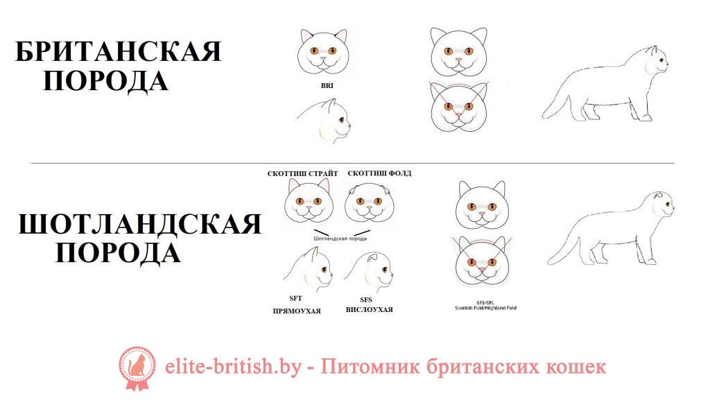 чем отличаются британские кошки от шотландских отличие британских кошек от шотландских чем отличаются британцы от шотландцев кошки чем британцы отличаются от шотландцев коты вислоухие коты британцы и шотландцы разница вислоухие котята британцы или шотландцы чем отличается британский кот от шотландского чем отличается британская порода кошек от шотландской как отличить британского котенка от шотландского отличие британца от шотландца кошки британцы и шотландцы отличия пород фото британские и шотландские кошки разница между британскими и шотландскими кошками вислоухие коты британцы и шотландцы вислоухая кошка британская или шотландская чем отличаются британские кошки от шотландских вислоухих как отличить британскую кошку от шотландской самара авито продажа шотландских и британских кошек отличие британцев от шотландцев котов отличие британской и шотландской породы кошек чем шотландцы отличаются от британцев котята как отличить британского кота от шотландского шотландская кошка и британская разница шотландский и британский кот отличия саратов продажа британских шотландских котят чем отличаются шотландские котята от британских британская и шотландская кошка отличия фото британский и шотландский кот