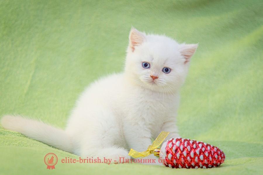 британский кот кремовый поинт, британец колор поинт, британская кошка поинт колор, британский кот поинт, британские котята поинт, британские котята кремовый поинт, британские котята колор поинт, кремовый поинт британец, британцы крем поинт, британец поинт, британские котята сил поинт, британские кошки кремовый поинт, британские котята окраса кремовый поинт, британец кремовый поинт фото, британец колор поинт фото, британская кошка колор поинт фото, кремовый пойнт британские кошки, британские кошки колор пойнт, кремовый пойнт британские котята, кремовый пойнт британцы, колор пойнт британец, кот британский колор пойнт, британские котята колор пойнт, крем-поинт, Cream-point BRI d 33, крем пойнт, крем поинт