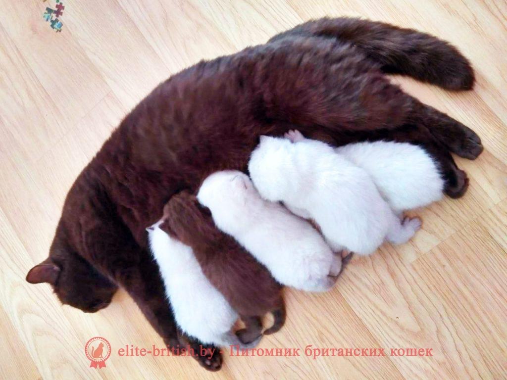 новорожденные котята, новорожденный котенок, новорожденный котенок фото, новорождённые котята фото, новорожденные шотландские котята, фото новорожденных вислоухих котят, новорожденные британские котята, новорожденный британский котенок, новорожденные котята британцы, развитие новорожденного котенка, развитие новорожденных котят, yjdjhj;ltyyst rjnznf, yjdjhj;ltyysq rjntyjr, yjdjhj;ltyysq rjntyjr ajnj, yjdjhj;ltyyst rjnznf ajnj, yjdjhj;ltyyst ijnkfylcrbt rjnznf, ajnj yjdjhj;ltyys[ dbckje[b[ rjnzn, yjdjhj;ltyyst ,hbnfycrbt rjnznf, yjdjhj;ltyysq ,hbnfycrbq rjntyjr
