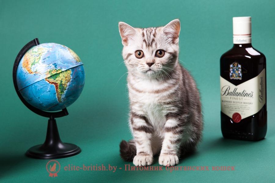 котенок 2 месяца, британский котенок 2 месяца, котёнок 2 месяца фото, котята шотландские 2 месяца, вислоухие котята 2 месяца, котята британцы 2 месяца, вислоухие шотландские котята 2 месяца, британские котята 2 месяца фото, шотландский котенок 2 месяца фото котята британцы фото 2 месяца, черный котенок 2 месяца, размер котенка в 2 месяца, поведение котят в 2 месяца, котята 2 месяца развитие уход сибирские котята 2 месяца фото, как воспитывать котенка 2 месяца, развитие котят по неделям,рост котят по неделям, как определить сколько недель котенку, развитие котенка по неделям фото, как узнать сколько недель котенку, сколько месяцев котенку, котенок до скольки месяцев, развитие котенка по месяцам, размер котят по месяцам, котята от рождения до месяца, взяли котенка 1 месяц, вислоухие котята 1 месяц фото, вислоухие котята 1 месяц фото, rjntyjr 2 vtczwf, ,hbnfycrbq rjntyjr 2 vtczwf, rjntyjr 2 vtczwf ajnj, rjnznf ijnkfylcrbt 2 vtczwf, dbckje[bt rjnznf 2 vtczwf, rjnznf ,hbnfyws 2 vtczwf, котёнок 2.5 месяца, котенок 2.5 месяца фото