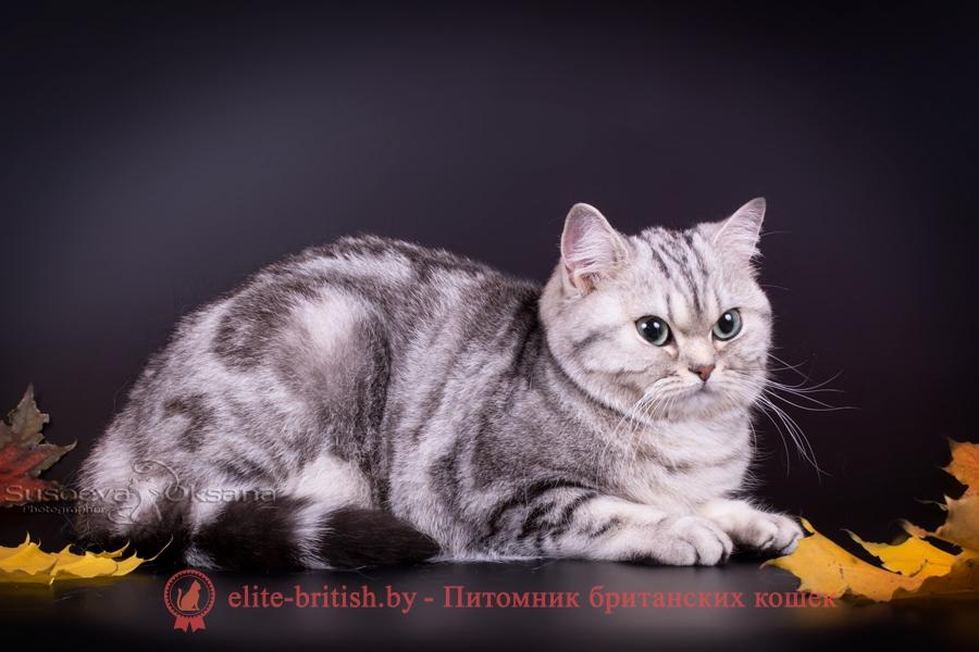 котенок 10 месяцев, развитие котенка по неделям фото, как узнать сколько недель котенку, сколько месяцев котенку, котенок до скольки месяцев, развитие котенка по месяцам, размер котят по месяцам, rjnznf 8 vtczwtd