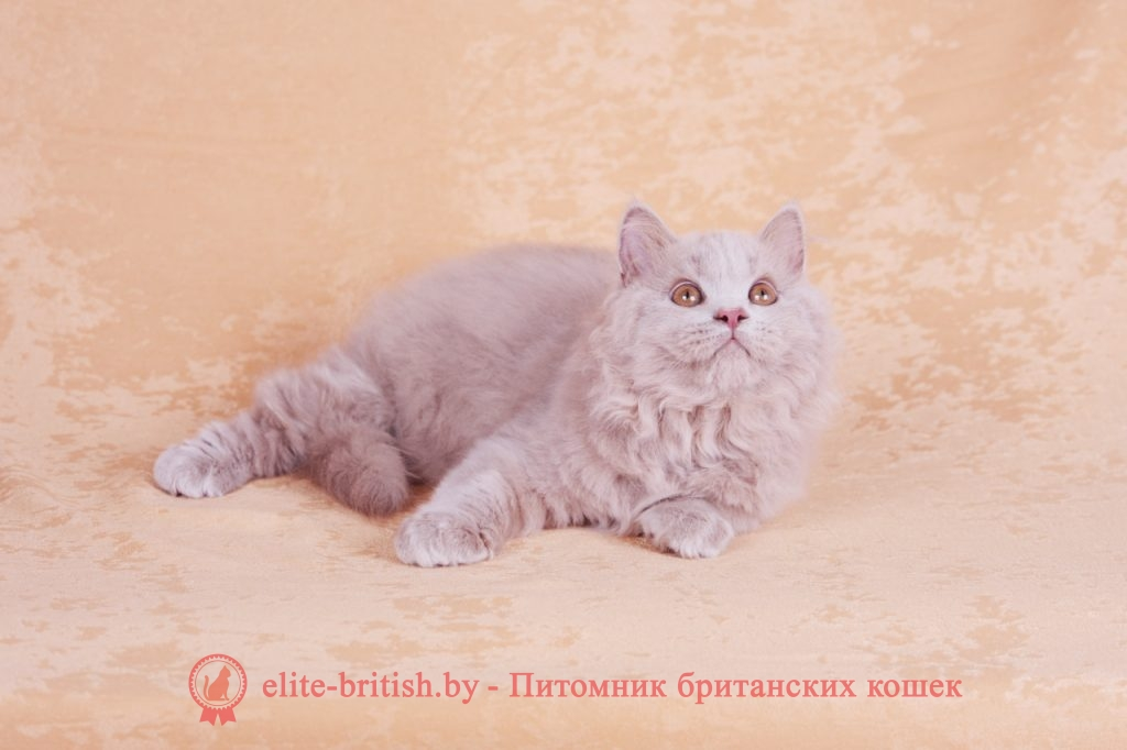 котенок 3 месяца, британский котенок 3 месяца, котенок 3 месяца фото, шотландский котенок в 3 месяца, британский котенок 3 месяца фото, котенок британец 3 месяца, котенок шотландский вислоухий 3 месяца, шотландский котенок 3 месяца фото, размер котенка в 3 месяца, котята сиамские 3 месяца, вислоухие котята 3 месяца фото, развитие котят по неделям,рост котят по неделям, как определить сколько недель котенку, развитие котенка по неделям фото, как узнать сколько недель котенку, сколько месяцев котенку, котенок до скольки месяцев, развитие котенка по месяцам, размер котят по месяцам, котята от рождения до месяца, взяли котенка 1 месяц, вислоухие котята 1 месяц фото, вислоухие котята 1 месяц фото, rjntyjr 3 vtczwf, ,hbnfycrbq rjntyjr 3 vtczwf ajnj, ijnkfylcrbq rjntyjr d 3 vtczwf ajnj, rjntyjr ,hbnfytw 3 vtczwf