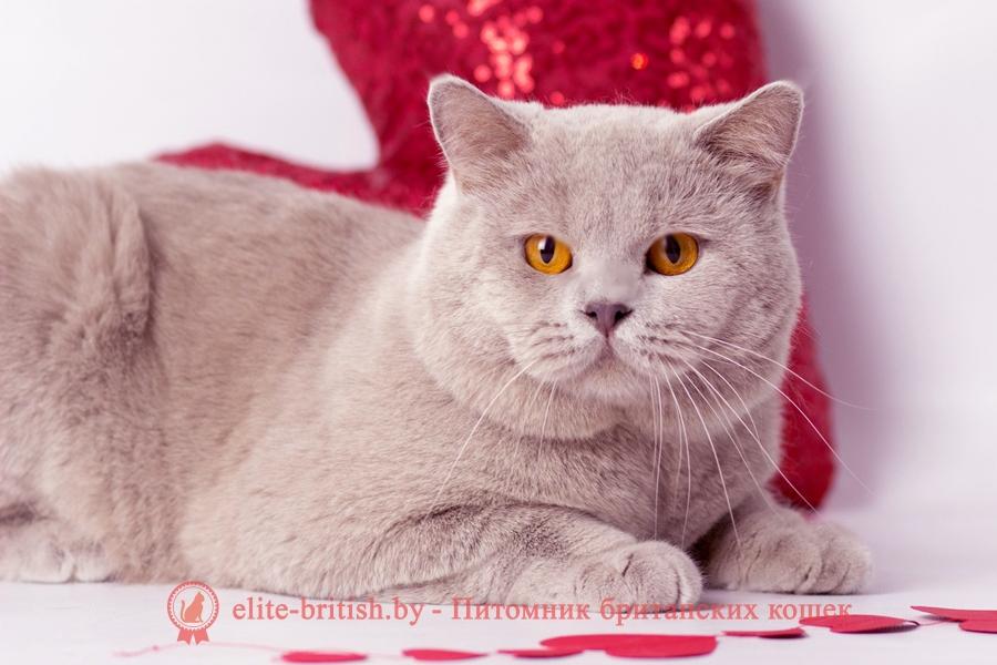 развитие котенка по неделям фото, как узнать сколько недель котенку, сколько месяцев котенку, котенок до скольки месяцев, развитие котенка по месяцам, размер котят по месяцам, rjnznf 8 vtczwtd