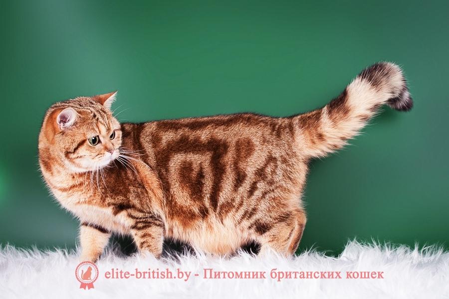 почему у британских кошек висит живот почему у кота британца висит живот у британской кошки висит кожа на животе мешок на животе у британских кошек британский кот висит живот у кота британца висит живот живот у британских кошек живот у британских котов британская кошка живот висит животные британские кошки авито животные кошки британские животные кошки британец авито животные кошки британцы животные коты британцы животные котята британские живот у британских котят