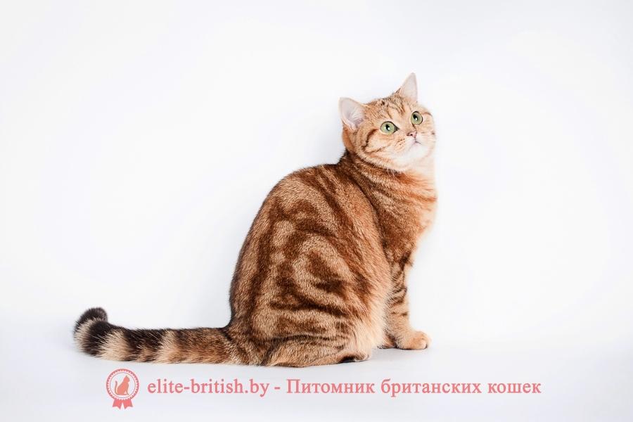 британский мраморный кот, британская мраморная кошка фото, британская мраморная кошка, мраморный британец котенок, мраморный британец кот, британские мраморные котята, британец кот фото мраморный, мраморный британец котенок фото, британский мраморный кот фото, британская кошка мраморный окрас, британский кот мраморного окраса, британские мраморные котята купить, британская вислоухая кошка фото мраморная, британские мраморные котята фото, британская кошка мраморный окрас фото, британская кошка серебристая мраморная, британские котята мраморного окраса, мраморные кошки британцы, питомник британских кошек мраморных, британский вислоухий мраморный кот, британские коты мраморный окрас фото, коты мраморного окраса британцы, мраморный британец котенок купить, британская кошка вислоухая мраморная, британская короткошерстная кошка мраморная, британец кот вислоухий мраморный, британская мраморная кошка характер, мраморный вислоухий британец фото котята, мраморный британский кот цена, британского мраморного вислоухого котенка, порода кошек мраморный британец, британская мраморная кошка цена