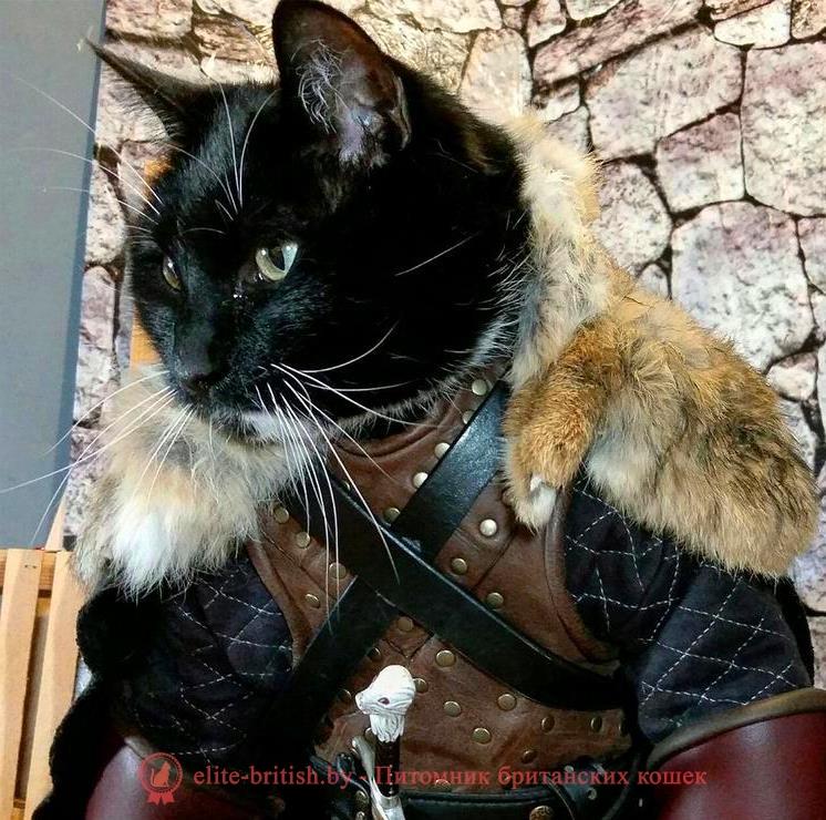 клички для котов британцев клички для котов британцев мальчиков имя для кота британца имена для британских котов имена для котов мальчиков британцев как назвать кота британца мальчика имя для британской кошки девочки имена для британских кошек как назвать кота британца как назвать британскую кошку девочку клички для британских котов как назвать британского котенка девочку как назвать британского котенка мальчика