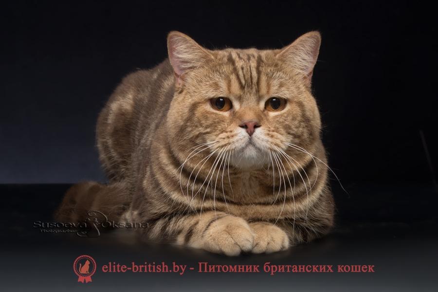 тигровая британская кошка, британец тигровый, британец табби тигровый, тигровый британский котенок, британский котенок тигрового окраса, британская тигровая кошка фото, тигровые британские котята фото, британский кот мраморный, мраморный британец, мраморный окрас британских котят, британский кот мраморного окраса, мраморный окрас британской кошки, британец мраморного окраса, котята британцы мраморный окрас, мраморный окрас британских котят, серебристый мраморный британец, британская мраморная кошка характер, британский кот мраморного окраса, британец голубой мрамор, британец черный мрамор на серебре, красный мраморный британец, британская мраморная кошка, мраморный окрас британской кошки, британские кошки черный мрамор, мраморная британская короткошерстная кошка, британские кошки мрамор на серебре, британский кот черный мрамор, британский кот мрамор на серебре, британский мраморный котенок, британские котята мрамор, британские котята мрамор на серебре
