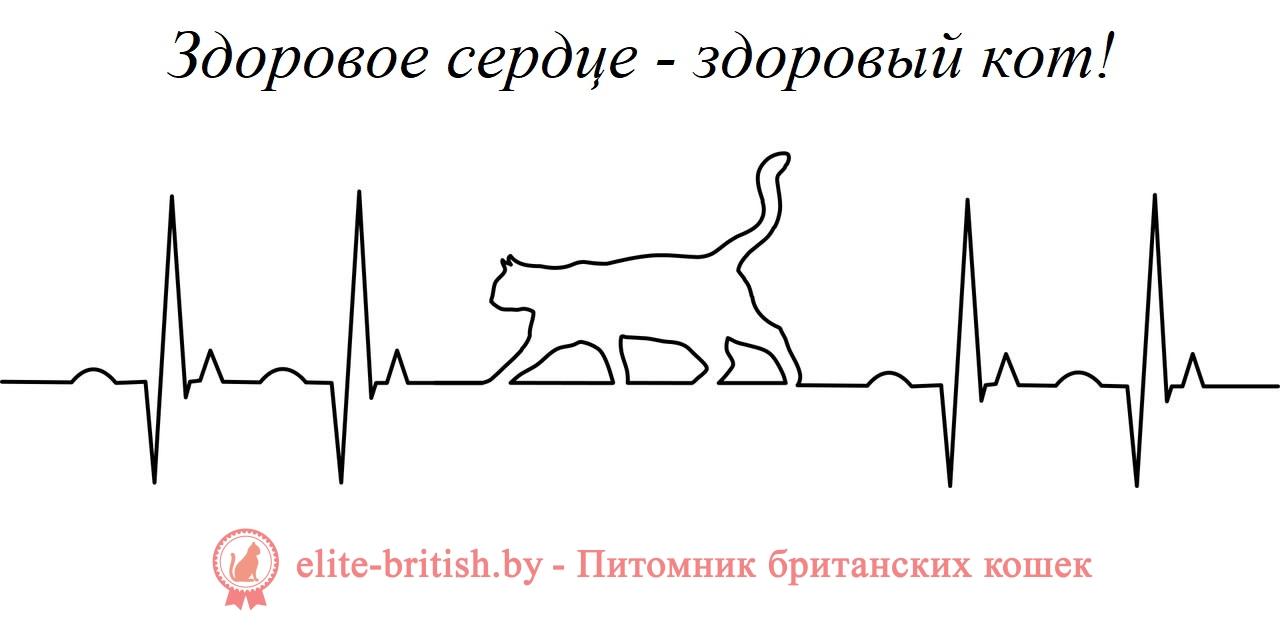 здоровье британских кошек, британские коты здоровье, здоровье британских кошек отзывы ветеринаров, британская кошка проблемы со здоровьем, здоровье британских кошек отзывы, какое слабое место в здоровье британских кошек, слабое место в здоровье британских кошек, какое слабое место у британских кошек, слабое место у британских кошек, какое самое слабое место у британских кошек, болезни британских кошек, болезни британских котов, британские кошки болезни породы, болезни британских котов и их симптомы, кошки британцы болезни, мочекаменная болезнь у британских котов, болезни британских кошек и их симптомы, болезни британских кошек симптомы и лечение, британский кот характеристика породы болезни, болезни у британцев котов, болезни британских вислоухих кошек, болезни глаз у британских кошек, коты британцы мочекаменная болезнь, британские котята болезни, британцы болезни породы, профилактика мочекаменной болезни у кастрированных котов британцев, британская порода болезни, британская короткошерстная болезни, болезни и лечение британских кошек, заболевания британских кошек, чем чаще всего болеют британские кошки, заболевания британских котов, генетические заболевания британских кошек, британская кошка заболела что делать, коты британцы мочекаменная болезнь, чем болеют британские кошки, британский кот болеет, кот британец заболевания, заболел кот британец