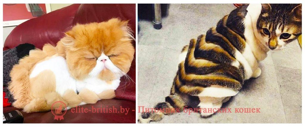 стрижка британских котов, стрижки котов британцев, стрижка британских кошек, стрижки британских котов фото, стрижки британских кошек фото, стриженный британский кот, стриженный британец кот фото, стрижка котов британцев фото, стрижка британцев кошек фото, стриженные британские коты фото, стриженные коты британцы, стриженная британская кошка, стрижки кошек британцев, стрижка британских котов цена, стриженные кошки британцы, британская кошка стрижка подо льва, стриженные британцы кошки фото, стриженная британская кошка фото