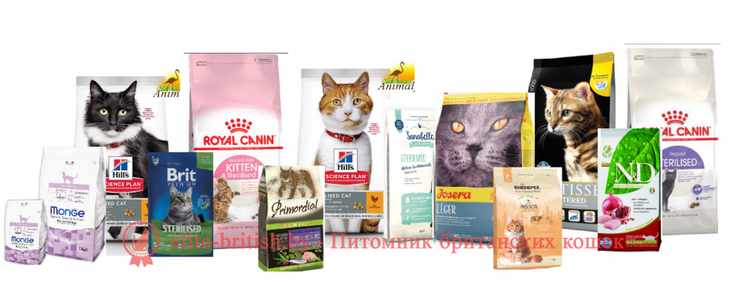 Как кормить британских кошек сухим кормом thumbnail