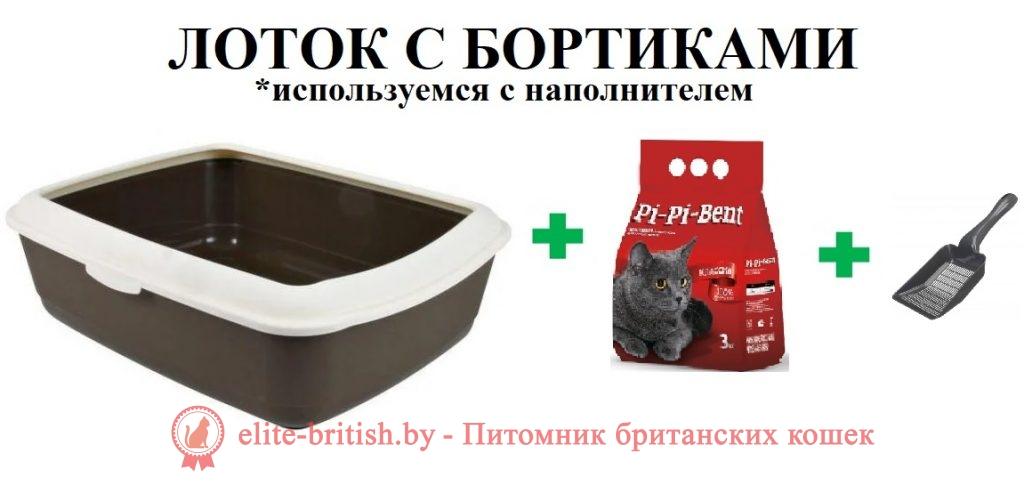 как выбрать лоток для кота как выбрать лоток для кошки как использовать лоток для кошек как наполнять лоток для кошек как приручить к лотку как приручить кота к лотку как приучить кота к лотку как приучить кошку к лотку большие лотки для кошек большой лоток для кошки высокий лоток для кошек какие бывают лотки для кошек какой лоток выбрать для кошки кот не какает в лоток кот не писает в лоток кот не ходит в лоток кот гадит рядом с лотком кот какает рядом с лотком кот отказывается ходить в лоток кот перестал писать в лоток кот писает мимо лотка кот срет не в лоток кот стал ходить мимо лотка кот ходит мимо лотка кошачий лоток кошка не ходит в лоток кошка гадит мимо лотка кошка гадит рядом с лотком кошка какает мимо лотка кошка мимо лотка кошка перестала ходить в лоток кошка писает не в лоток кошка ходит мимо лотка кошка ходит рядом с лотком лотки для котят лотки для кошек с сеткой лоток лоток для кота лоток для кошек лоток для кошек с бортиками лоток для кошек закрытый лоток для кошек фото лоток домик для кошек лоток фото маленький лоток для кошек почему кот писает мимо лотка почему кот ходит мимо лотка почему кошки гадят мимо лотка приучение кота к лотку приучение кошек к лотку приучить взрослого кота к лотку приучить взрослую кошку к лотку размеры лотков туалет лоток туалет лоток для кошек