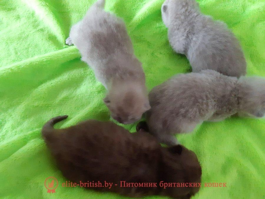 лиловый британец, британец лиловый фото, фото лиловых британцев, британский лиловый котенок, британские коты лилового окраса фото, фото лиловых британских котят, британские котята фото лиловые, британская кошка фото лиловая, фото лиловой британской кошки, британские котята лилового окраса фото, лиловая британская кошка, британский лиловый кот фото, британские котята лилового окраса, лиловый окрас британских кошек фото, лиловый британский кот, кот британец лиловый фото, лиловый окрас британских кошек, британцы лилового окраса, британец лилового цвета, британец лилового окраса фото, лиловые британцы вислоухие фото, британская короткошерстная кошка лиловая, лиловый цвет британских кошек, британская лиловая кошка характер, британские котята лилового цвета, британские вислоухие котята фото лиловые, котята британцы лиловые фото, британский кот лилового окраса, британский вислоухий кот лиловый, британские котята лиловые купить, британские лиловые котята цена, купить лилового британца, лиловылиловый британец, британец лиловый фото, фото лиловых британцев, британский лиловый котенок, британские коты лилового окраса фото, фото лиловых британских котят, британские котята фото лиловые, британская кошка фото лиловая, фото лиловой британской кошки, британские котята лилового окраса фото, лиловая британская кошка, британский лиловый кот фото, британские котята лилового окраса, лиловый окрас британских кошек фото, лиловый британский кот, кот британец лиловый фото, лиловый окрас британских кошек, британцы лилового окраса, британец лилового цвета, британец лилового окраса фото, лиловые британцы вислоухие фото, британская короткошерстная кошка лиловая, лиловый цвет британских кошек, британская лиловая кошка характер, британские котята лилового цвета, британские вислоухие котята фото лиловые, котята британцы лиловые фото, британский кот лилового окраса, британский вислоухий кот лиловый, британские котята лиловые купить, британские лиловые котята цена, купить лилового британца, лиловые 