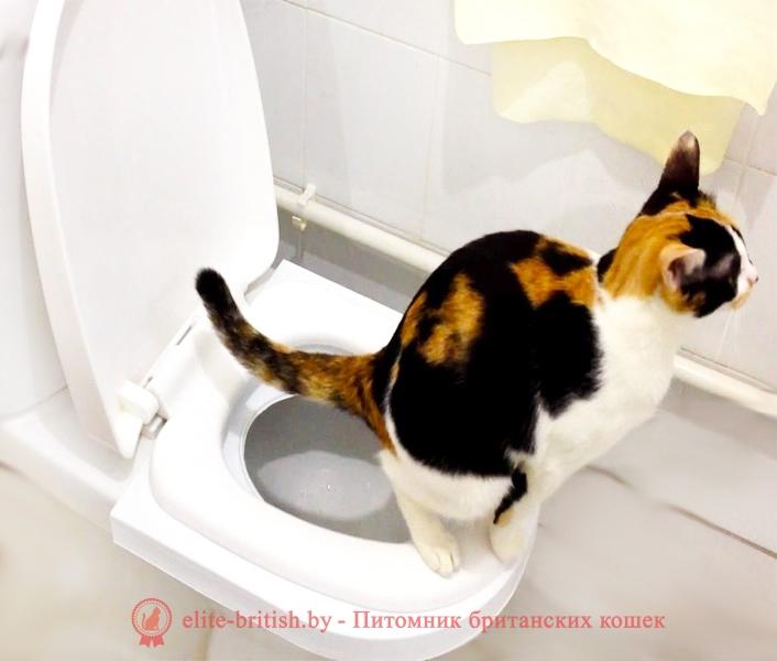 кот на унитазе как приучить котёнка к унитазу, приучение котенка к унитазу, кот на унитазе, кот ходит на унитаз, приучить кота ходить на унитаз, как кота приучить к унитазу, научить кота ходить на унитаз, накладка для унитаза для котов, приучение котов к унитазу, кот на унитазе фото, туалет для котов на унитаз, лоток на унитаз для кота, крышка на унитаз для котов, коты на унитазах картинки, унитазы для кошек, приучение кошек к унитазу, кошка ходит в унитаз, систему приучения кошек к унитазу, сидение на унитаз для кошек, лоток для кошек на унитаз, приучатель к унитазу для кошек, решетка на унитаз для кошек, насадки на унитаз для кошек